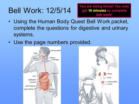Bell Work: 12/5/14 Using the Human Body Quest Bell Work packet, complete the questions for digestive and urinary systems. Use the page numbers provided.