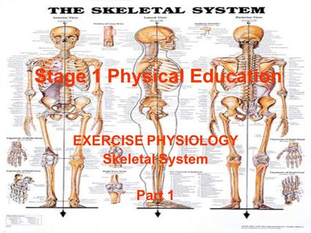 Stage 1 Physical Education EXERCISE PHYSIOLOGY Skeletal System Part 1.