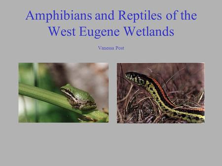 Amphibians and Reptiles of the West Eugene Wetlands Vanessa Post.