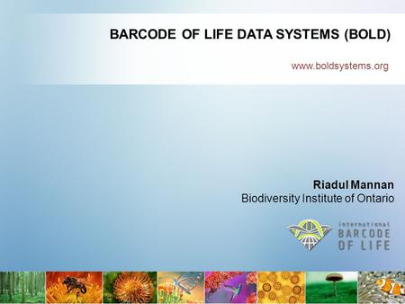 Www.boldsystems.org BARCODE OF LIFE DATA SYSTEMS (BOLD) Riadul Mannan Biodiversity Institute of Ontario.