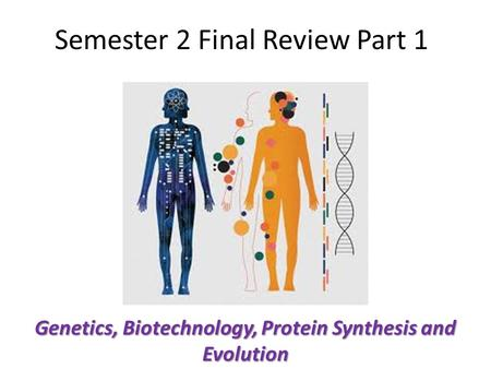 Semester 2 Final Review Part 1 Genetics, Biotechnology, Protein Synthesis and Evolution.