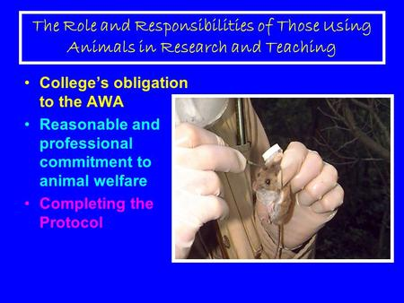 The Role and Responsibilities of Those Using Animals in Research and Teaching College's obligation to the AWA Reasonable and professional commitment to.