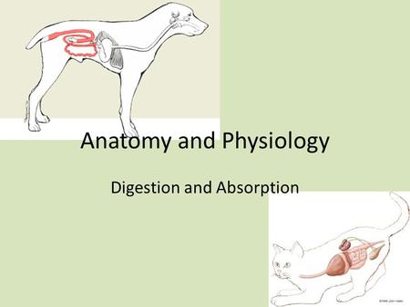 Anatomy and Physiology Digestion and Absorption. Mastication Mechanical reduction of the ingested food particles Food is mixed with saliva forming a bolus.