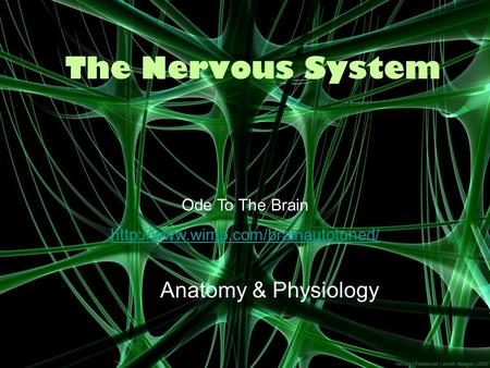 The Nervous <strong>System</strong> <strong>Anatomy</strong> & <strong>Physiology</strong> Ode To The Brain
