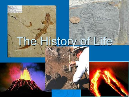 The History of Life. The Record of Life  You may have seen thrilling movies or read books that describe travel in time. The characters often encountering.