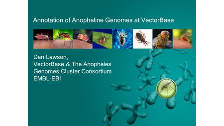 Annotation of Anopheline Genomes at VectorBase Dan Lawson, VectorBase & The Anopheles Genomes Cluster Consortium EMBL-EBI.