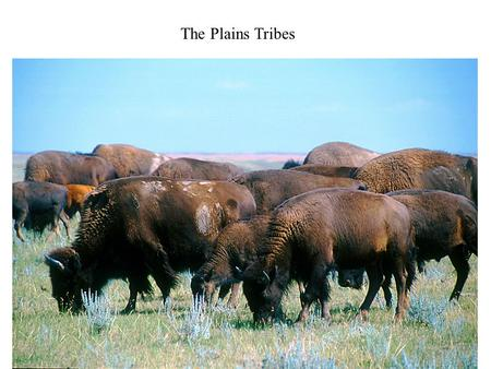 The Plains Tribes.
