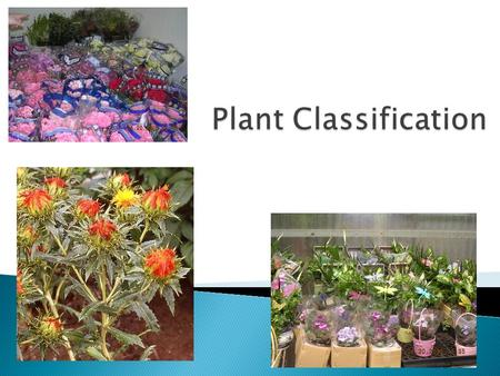 -a means of grouping plants according to their similarities.