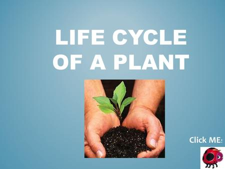 LIFE CYCLE OF A PLANT Click ME !. LIFE SCIENCE 1 st Grade Specific Objectives: The learner will understand that plants have a life cycle. The learner.