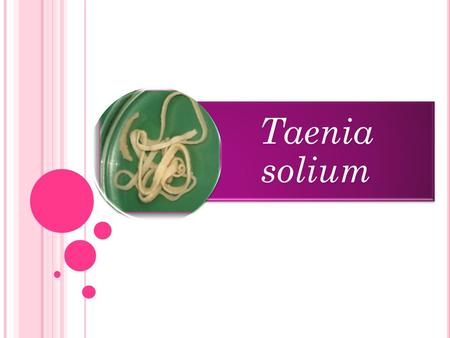 Taenia solium. INTRODUCTION MORPHOLOGY LIFE CYCLE CLINICAL FEATURES DIAGNOSIS TREATMENT.