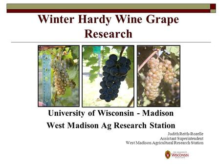 Winter Hardy Wine Grape Research University of Wisconsin - Madison West Madison Ag Research Station Judith Reith-Rozelle Assistant Superintendent West.