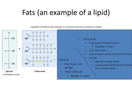 Fats (an example of a lipid) Glycerol – Has three –OH groups – Polar molecule Soluble in water Fatty Acids – Long chains of hydrocarbons Insoluble in water.