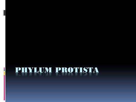 Drop of Water  Protista is a paraphyletic clade in which protists can more closely be related to plants, fungi, and animals than other protists  Eukaryotic.