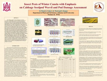 Insect Pests of Winter Canola with Emphasis on Cabbage Seedpod Weevil and Pod Damage Assessment R. Ward, E. Cebert, K. Ward and S. Kumar Department of.