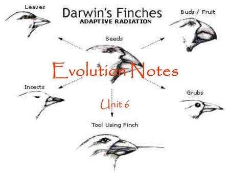 Evolution Notes Unit 6.