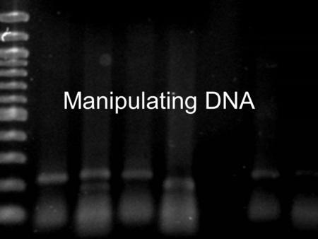 Manipulating DNA. Scientists use their knowledge of the structure of DNA and its chemical properties to study and change DNA molecules Different techniques.