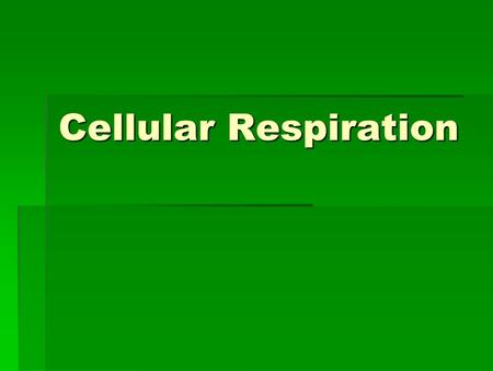 Cellular Respiration. What is Cellular Respiration?  The process of converting food energy into ATP energy  C 6 H 12 O 6 + 6 O 2 → 6 CO 2 + 6 H 2 O.