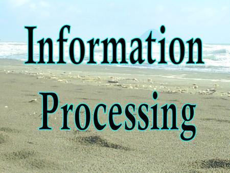 Information Processing.