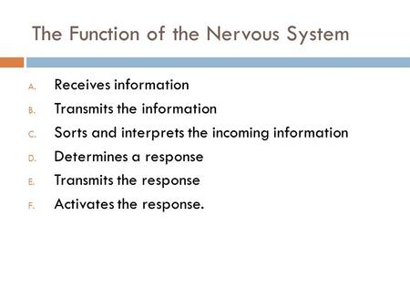 The Function of the Nervous System