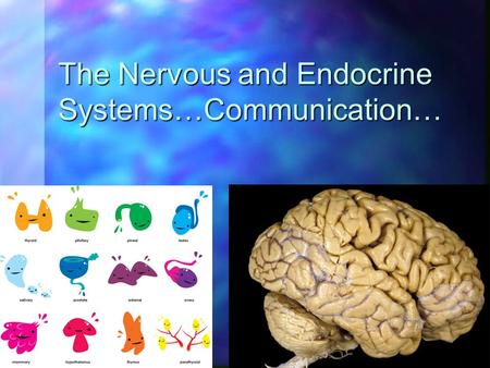 The Nervous and Endocrine Systems…Communication….