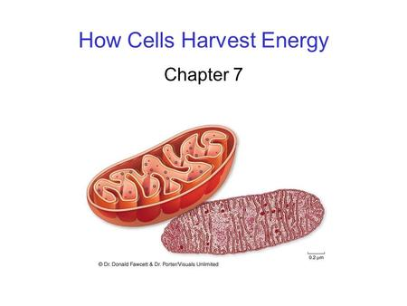 How Cells Harvest Energy Chapter 7. 2 MAIN IDEA All cells derive chemical energy form organic molecules and use it to convert that energy to ATP.