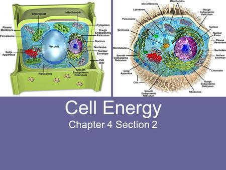 Cell Energy Chapter 4 Section 2. Objectives: Describe photosynthesis and cellular respiration. Compare cellular respiration with fermentation.