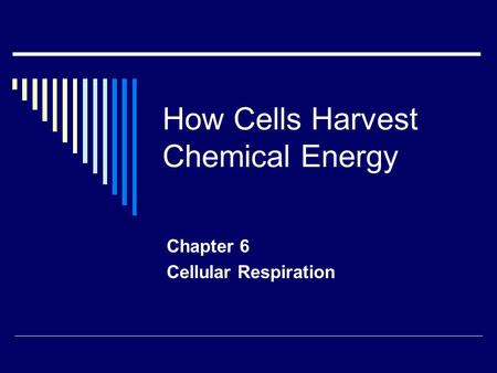 How Cells Harvest Chemical Energy Chapter 6 Cellular Respiration.