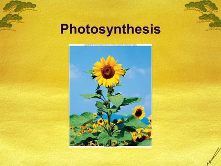 Photosynthesis.  Photosynthesis  Photo – light  Synthesis – making or putting together  Process that converts light energy from the sun into chemical.