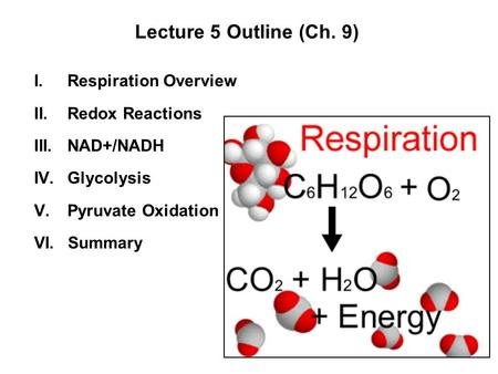 Lecture 5 Outline (Ch. 9) Respiration Overview Redox Reactions