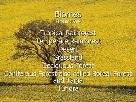 Biomes Terrestrial Only Tropical Rainforest Temperate Rainforest DesertGrassland Deciduous Forest Coniferous Forest also called Boreal Forest and Taiga.