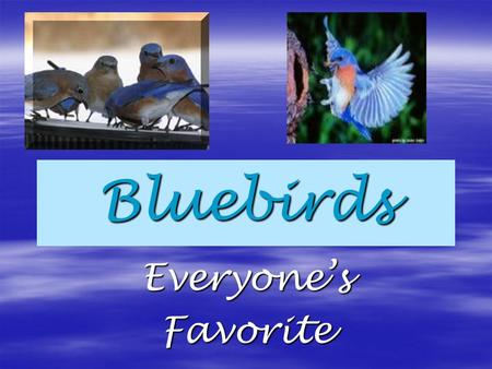 Bluebirds Everyone'sFavorite. Somewhere over the rainbow Bluebirds fly. Birds fly over the rainbow- Why then, oh why can't I? Do you recognize this famous.