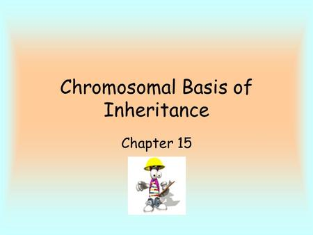 Chromosomal Basis of Inheritance Chapter 15. Most genetics work done on fruit flies (little time to observe many generations) Thomas Morgan - fruit fly.