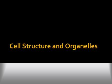 Cell Structure and Organelles. Cell wall  functions to protect and support cells  made of a rigid material called cellulose in plants  animal cells.