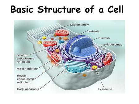 Basic Structure of a Cell Introduction to Cells Cells are the basic units of organisms Cells can only be observed under microscope Basic types of cells: