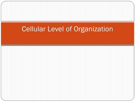 Cellular Level of Organization