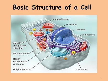 1 Basic Structure of a Cell. 2 Introduction to Cells Cells are the basic units of organisms Cells can only be observed under microscope Basic types of.