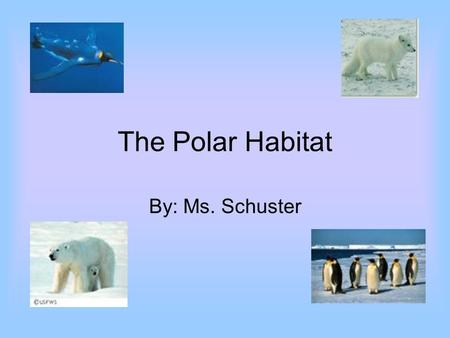The Polar Habitat By: Ms. Schuster.