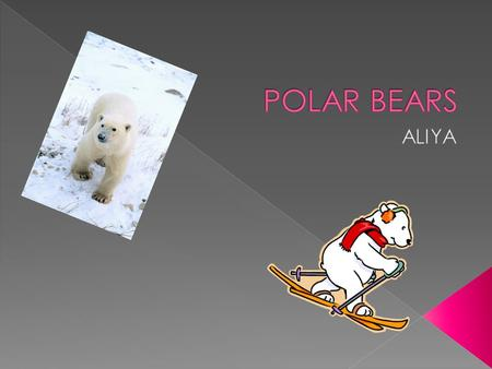  Have you ever seen a yellowish white bear? You were probably looking at a polar bear. Polar bears are very cool! Polar bears are very cute. Polar bears.