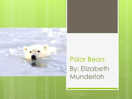 Polar Bears By: Elizabeth Munderloh. Interesting Facts.
