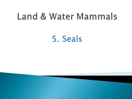 5. Seals 1. Seals are excellent swimmers and divers 2 Some can swim 15 miles an hour and others can dive 2,000 feet underwater.