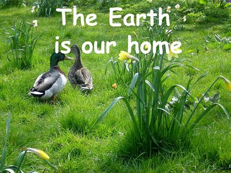 The Earth is our home. These are the names of the environmental problems of today: Littering Air pollution, smog Water pollution Overcrowding, overpopulation.
