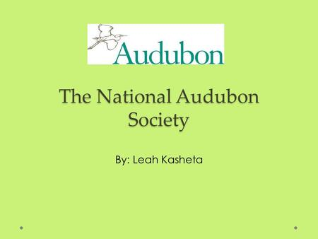 The National Audubon Society By: Leah Kasheta. Their Mission: To conserve and restore natural ecosystems, focusing on birds, other wildlife, and their.