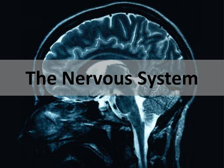 The Nervous System Evolution of the Nervous System.