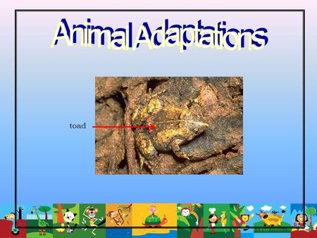 Animal Adaptations toad.