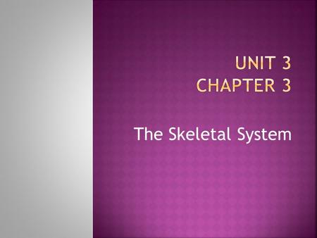 Unit 3 Chapter 3 The Skeletal System.