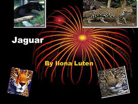 Jaguar By Ilona Luten. There are five different groups of animals with vertebrates. These classifications are: Mammals Fish Reptiles Birds Amphibians.