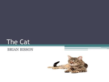 The Cat BRIAN BISSON. The scientific name for the domestic cat is Felis Catus Man's history with the cat goes all the way back to Ancient Egypt where.