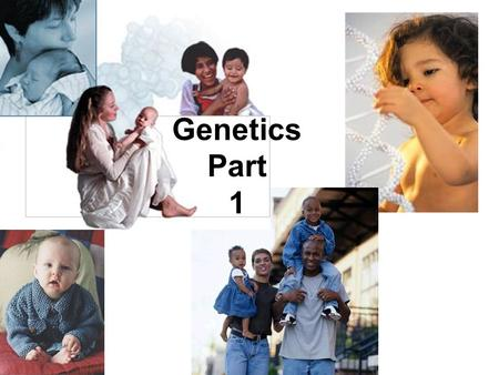 Genetics Part 1. You have your genes to thank – or blame for how you look Genes are your body's instruction manual. They affect the way you look, your.