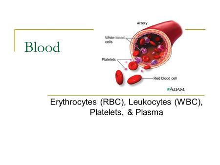 Blood Erythrocytes (RBC), Leukocytes (WBC), Platelets, & Plasma.