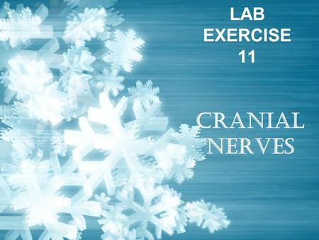 LAB EXERCISE 11 CRANIAL NERVES. Cranial Nerves Twelve pairs of cranial nerves –That arise from the brain Each nerve is identified by a Roman number –I.